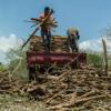 Dominikanische Republik: Guaconejo vom Aussterben bedroht