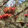 Dominikanische Republik: Patenschaften sollen vom Aussterben bedrohten Pflanzen helfen