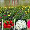 Dominikanische Republik - Die Blumentour in Constanza