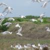 Dominikanische Republik: Montecristi bietet Vogelliebhabern viel