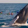 Dominikanische Republik auf der Suche nach Walflüsterer Nr. 9