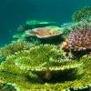 50 % des Korallenbestandes in der Karibik gingen verloren