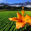 Dominikanische Republik: Constanza fordert bessere Wege zum Valle Nuevo / Agua Blanca