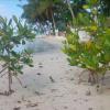 Dominikanische Republik: Boca Chica gibt der Natur eine zweite Chance