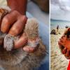 Karibik: Tier Misshandlungen - zur Unterhaltung von Touristen