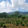 Dominikanische Republik: Leben im Paradies - dazu eine passende Geschäftsidee