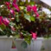 Dominikanische Republik: Blumen bestimmen das Leben tausender Dominikaner
