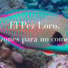 Dominikanische Republik: 3 Gründe, warum man keinen Papageienfisch essen sollte