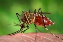 denguemoskito1