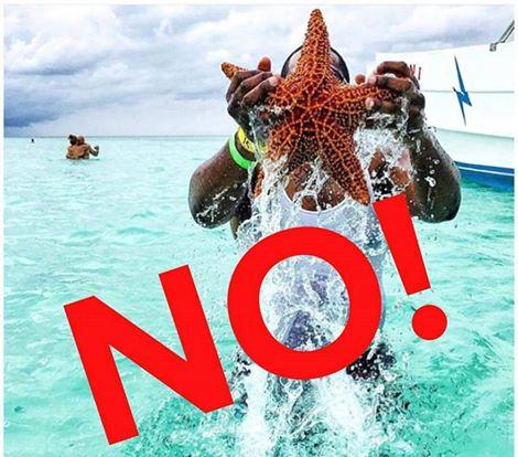 Dominikanische Republik Nr 1 Ausflug Saona Aber Wie